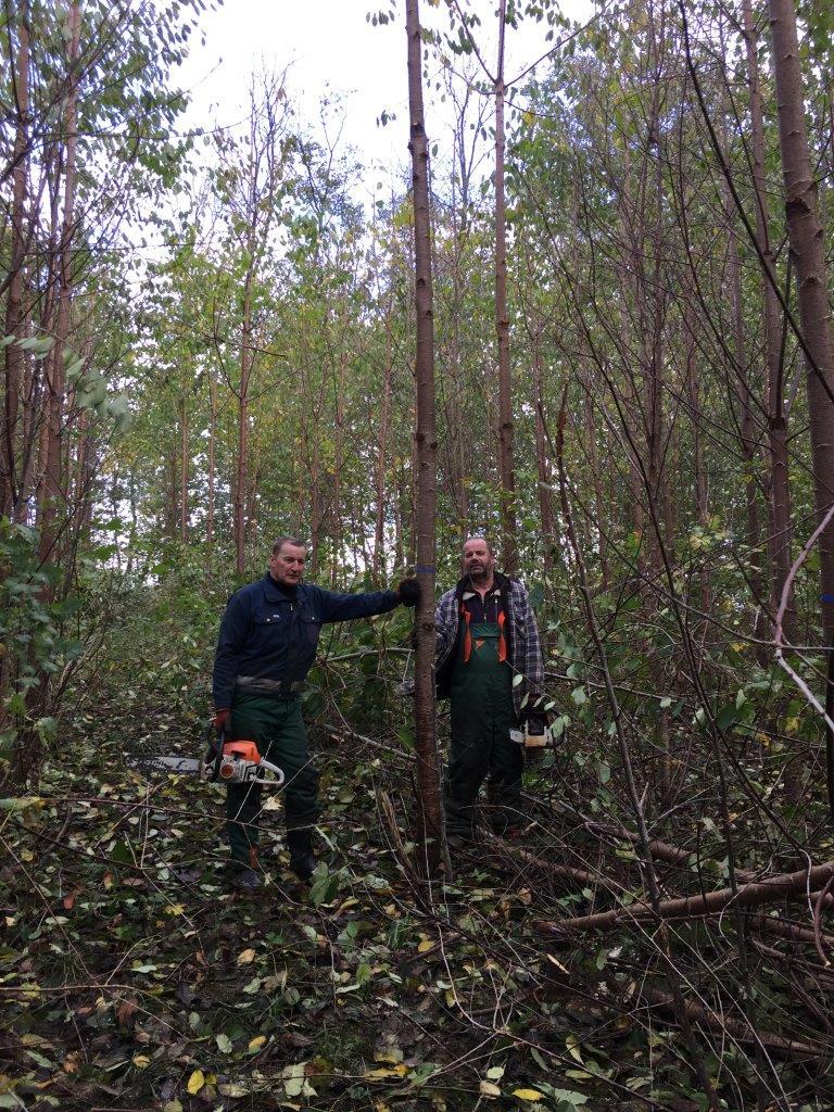 Wald-Facharbeiter stellen Z-Baeume in Damshagen frei