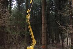 Wertholzproduktion. Versuch mit einem Steiger auf Raupenlaufwerk Douglasien (Pseudotsuga menziesi viridis) bis 11m zu aesten.
