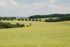 GutStaven-Goehrs-Staven pflanze 19.6.07009